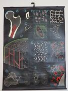 Vintage Dr Auzoux And P Sougy Pull Roll Down School Chart Of Human Bone Medical