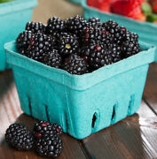 500 Case 1 Pint Green Berry Produce Fruit Basket Molded Pulp Cardboard Container