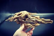 Very Old And Rare Piece Of Vietnamese Agarwood For Decoration 174gr Under Water
