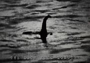 The Loch Ness Monster R.k. Wilson Black And White Poster 24 X 33.75