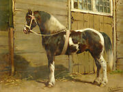 Horse-breeds-danish Horse-deensche Paard-after Eerelman-c.1898