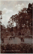 R226819 1661. Ponies In A New Forest Glade. Sunshine Series. Rp. E. A. Sweetman.