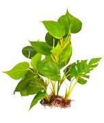 Sungrow Leaf Plant For Freshwater Or Saltwater Fish Tank/aquariums. 10 Inch