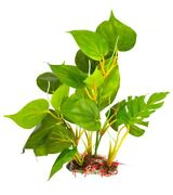 Sungrow Leaf Plant For Freshwater Or Saltwater Fish Tank/aquariums. 8 Inch