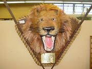 Realistic Lion's Head Is 100 Vegetable Non-animal, W/real Antique Spears
