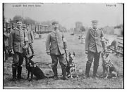 German Red Cross, 1915, Wwi Era, Dogs With Handlers, Photo Reproduction