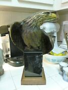 Large American Bald Eagle Wildlife Bronze By Robert Taylor