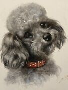 Poodle Dog Original Watercolour Painting By Mabel Gear.