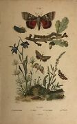 Antique E Guerin Botanical Print Of Moths By Dated 1837