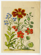 Antique Print-insects-marigold-tagete-flower-clxii-merian-1730