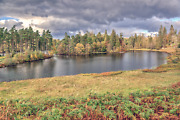 Lake District Photographic Print - The Islands Of Tarn Hows