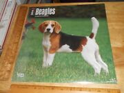 Beagles 2014 Wall Calendara Different Beagle Dog Image Every Month 12 X 12