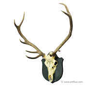 Antique Black Forest Deer Trophy From Salem - Germany 1903