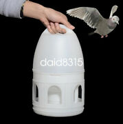 3l White/green Plastic Drinker With Handle Pigeons Birds Accessories Suppliers