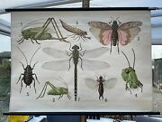 Vintage Insects School Chart Lithograph Educational Linen Poster Dragonfly
