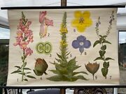 Vintage Flowers School Chart Educational Wall Chart Snapdragon Speedwell Mullein