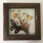 Real Butterflies Display Taxidermy Double Glass Shadow Box Frame 8andrdquo X 8andrdquo