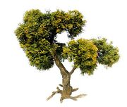 Model Trees Product 135 Scale. Approx 32 Cm. Height. Nt-004