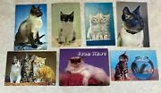 Feline Friends Vintage 1960's England Cat Postcards With Some Stamps