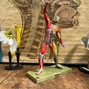 Vintage Somso Male Muscle Figure Educational Model Anatomy Model With Colour