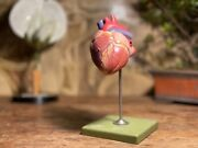 Vintage Somso Canine Heart Educational Model Didactic Anatomy Model Dog Heart