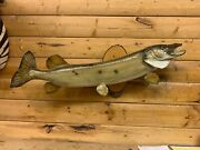 Real Skin Mount Northern Pike Walleye Musky Fish Taxidermy Fnp19