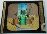 Colored Glass Magic Lantern Slide Asm Peter Rabbit Rushes Into The Tool Shed