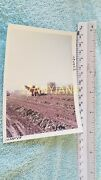 Ac0223 Allis-chalmers Photograph, Media Archive Tractor In Field Harvesting