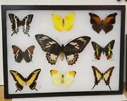 Real Framed Butterfly Collection 12