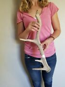 Smaller 4 Point Rustic Wyoming Elk Antler Shed Natural Decor Crafting Chew Knife