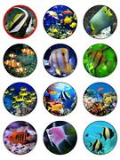 12 X Tropical Fish 2 Pre Cut Icing Cup Cake / Cake Toppers Decorations
