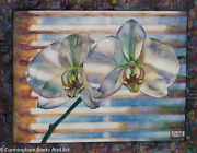 Orchid - Phalaenopsis Watercolour - Unmatted Us 614