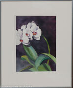 Orchid - Phalaenopsis Watercolour - Unmatted - Unframed Us619