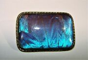 Art Deco Butterfly Wing Blue Morpho Sterling Silver Brooch Pin Marked Swd And Co