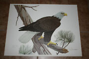 John A Ruthven Signed Numbered Limited Edition Print Bald Eagle 24x18