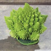 2021 Park Seed 20 Veronica Cauliflower Seeds. Sweet And Mild. Fast Free Shipping