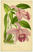 Botanical Color Plates Late / Floral World Beautifully Coloured Plates Cover