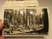 Real Photo Postcard Lot Of 52 Rppc Sequoia Nat'l Park 1950's Black And White