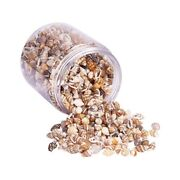 20xabout 1300-1500 Tiny Sea Shell Ocean Beach Spiral Seashells Craft Charms
