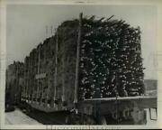 1938 Press Photo Evergreen Trees For Annual Christmas Tree Harvest In Maine
