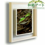 Japanese Paper Art Frame Tree Summer Green Young Leaves From Acorns 63x51cm