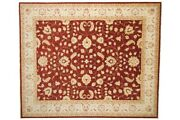 Afghan Chobi Ziegler Carpet Hand Knotted 250x300 Red Oriental Wool
