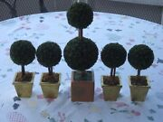 5 Vintage Boxwood Ball Topiaries In Gold Planters-1 Large 13 And 4 Medium 8 Rare