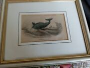 Antique Framed Print Greenland Whale - Whale Fishing In Very Good Condition