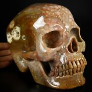 Huge 7.1 Coral Fossil Carved Crystal Skull Realistic Crystal Healing704