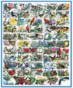 White Mountain 1000 Pieces Jigsaw Puzzle - State Birds And Flowers