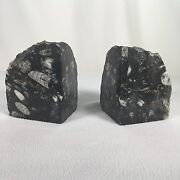 Stone Fossil Bookends Polished Made In Morocco Approx 5 Tall Approx 4lbs Each