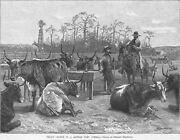 Texan Cattle In A Kansas Corn Corral - By Frederic Remington- Cattle Drive -1888