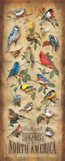Backyard Birds 12 X 30 Wood Sign By Catherine Mcclung