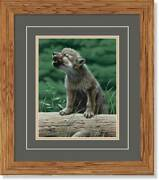 Wolf In Training - Timberwolf Gna Deluxe Framed Print By Neal Anderson